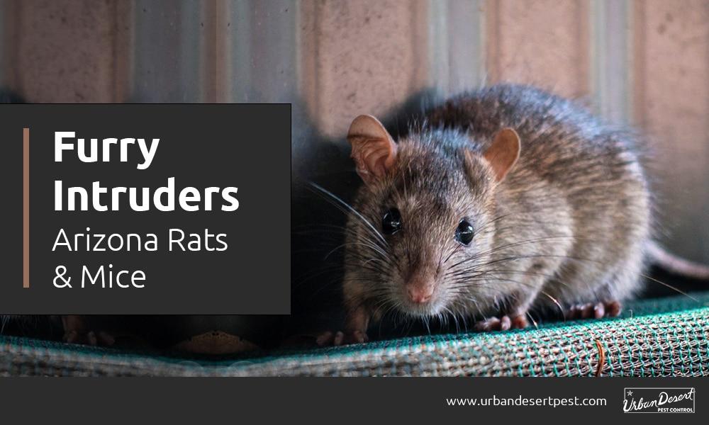 Furry Intruders: Arizona Rats & Mice
